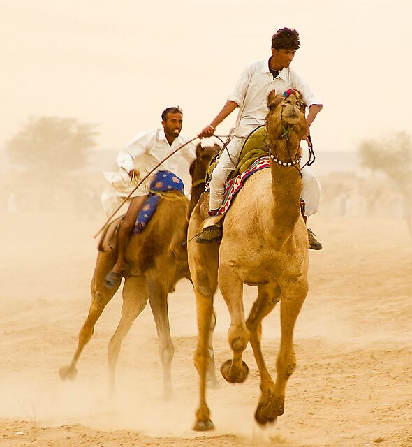 Camels of Rajasthan by Mukesh Srivastava