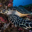 Hawksbill Haven by MattTworkowski