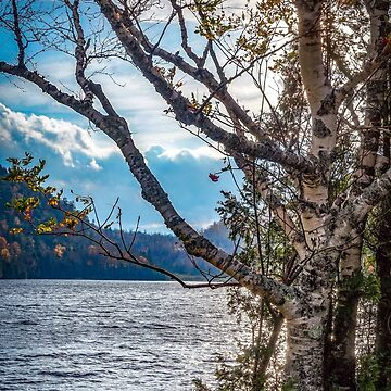 Autumn light by KENDALLMcKERNON