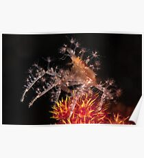 Spiny Spider  Poster