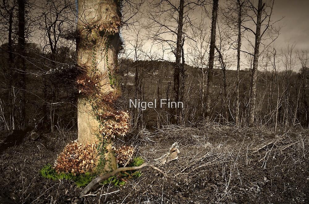 Like A Phoenix by Nigel Finn
