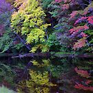New Hampshire Colors by kittyrodehorst