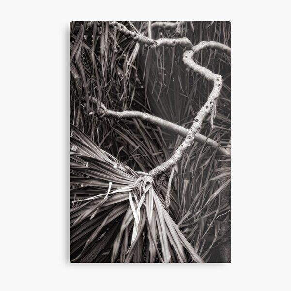 Pandanus abstract Metal Print
