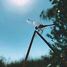 fantastic insect by Julia  Kovtunyak