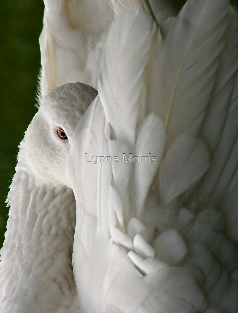 Ruffled Feathers by Lynne Morris