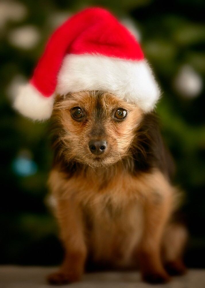 Merry Christmas by Yves Rubin