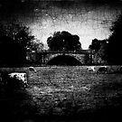 Attingham Park, Shropshire by Matt Sillence