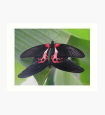 Scarlet Mormon Butterflies Art Print
