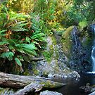 Hogarth Falls by Glen Johnson