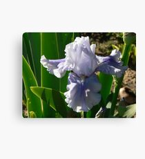 """Sajakeda"" - Bearded Iris Canvas Print"
