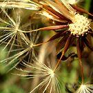 Dandelions Again..  by myREVolution