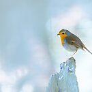 Red Robin by Cat Burton