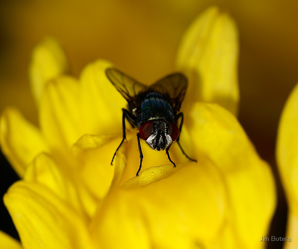 Fly on a mum by Jim Butera