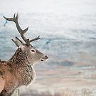 A Wild Scottish Deer by Cat Burton