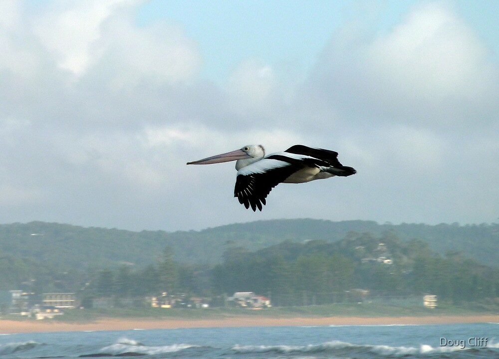 Pelican in the air by Doug Cliff
