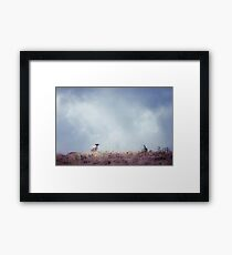 The Lookout (Cat Burton Photography) Framed Print
