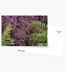 Heather and Fern Postcards