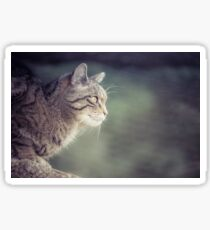 Scottish Wildcat Sticker