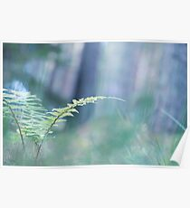 Ferns and Daydreams (Cat Burton Photography) Poster