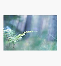 Ferns and Daydreams (Cat Burton Photography) Photographic Print