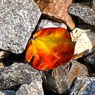 The Flame of Autumn  by RollZLX