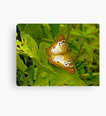 Butterfly at the Everglades Canvas Print