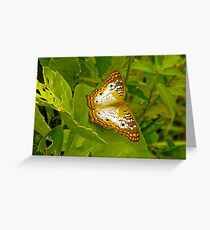Butterfly at the Everglades Greeting Card