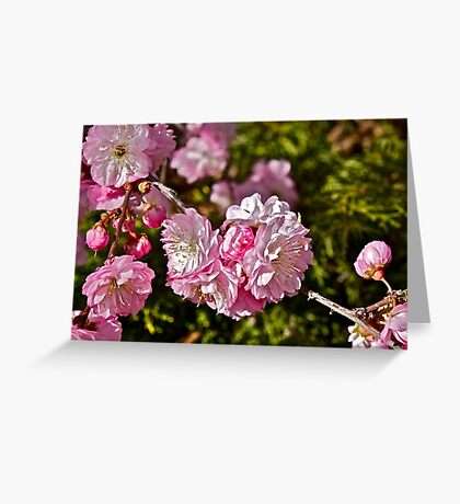 Pops of Pink  Greeting Card