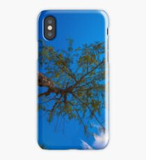 The tree under direct sunlight and blue sky iPhone Case