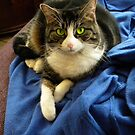 bootsi on a snuggie... by Mel Taylor