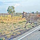 Brahmin Bull by V1mage