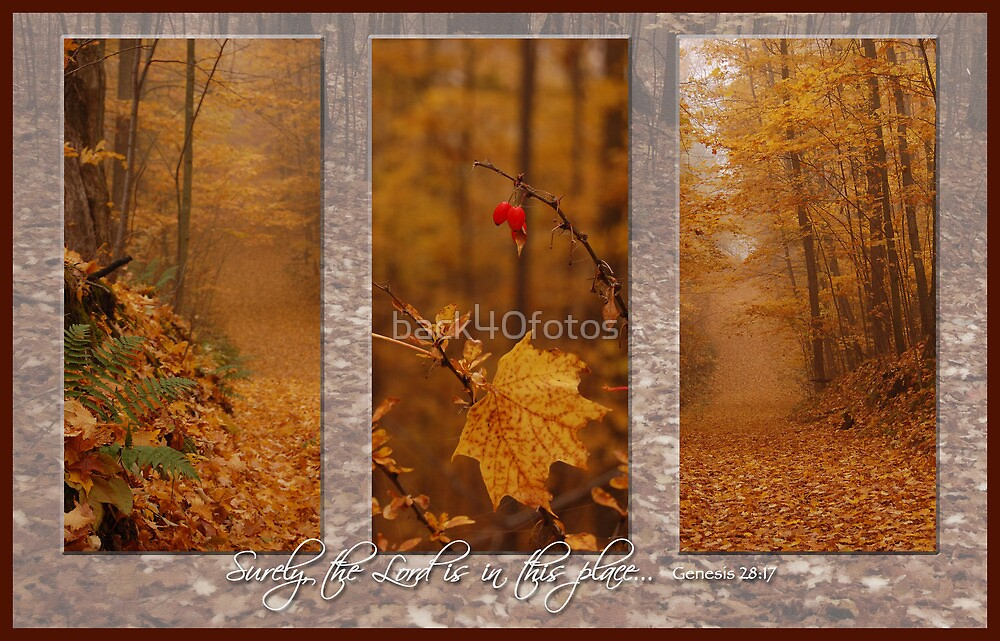 Autumn Tryp by back40fotos