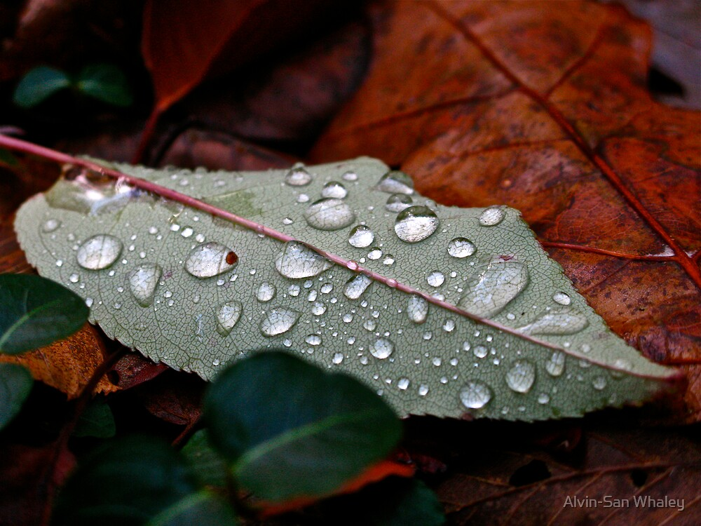 After The Rain by Alvin-San Whaley