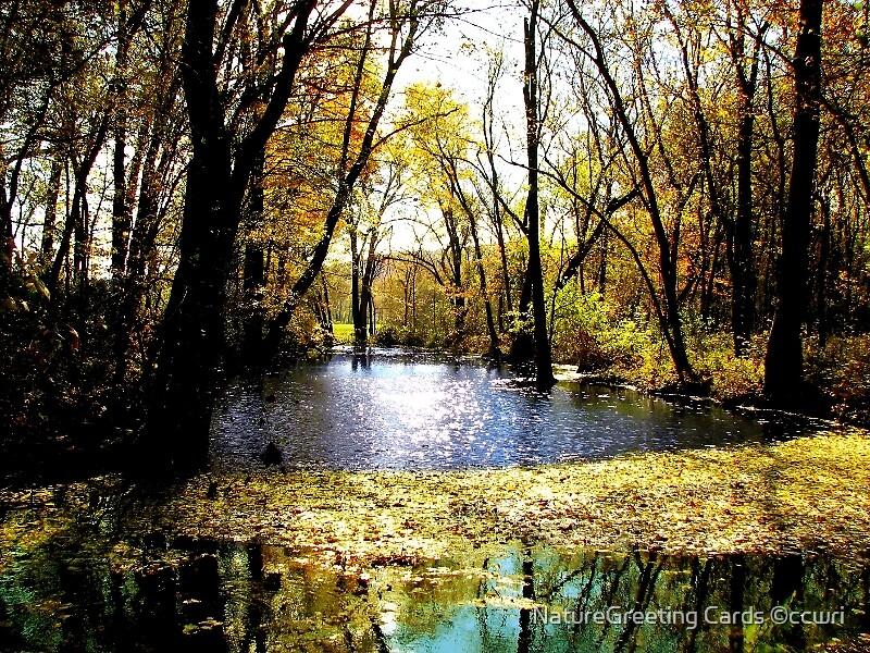 Autumn Breeze by NatureGreeting Cards ©ccwri