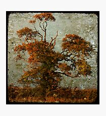 estampe tree Photographic Print