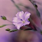 Purple Flower by Debja
