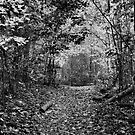 Muted Pathway Through Forest by mrthink