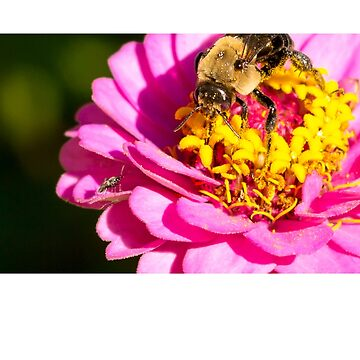 Honey Bee on Purple Red Yellow Pollen Flower facing off smaller Bug Insect  by FancyFrocks