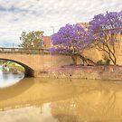 Jacarandas at Lennox Bridge by Richard  Windeyer