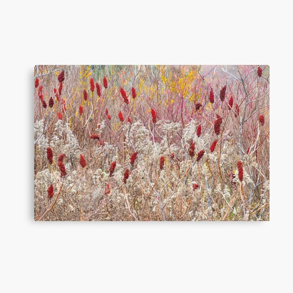 November Tapestry Canvas Print