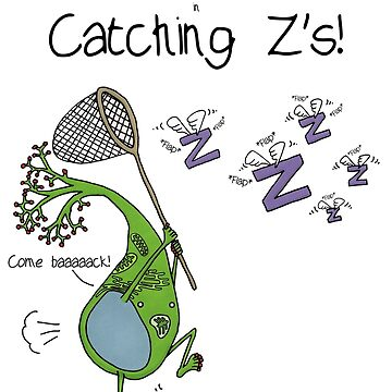 Catching Z's by Immy