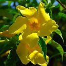 Yellow by inglesina