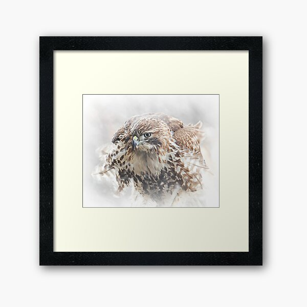 Red-tailed Hawk Framed Art Print