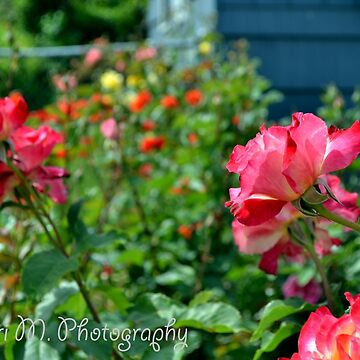 Rose Garden by moregoodart