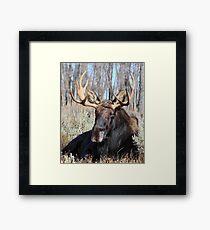 Sitting Bull. (Jackson Wyoming) Framed Print