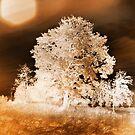 Negative sepia tree by Olav Lunde
