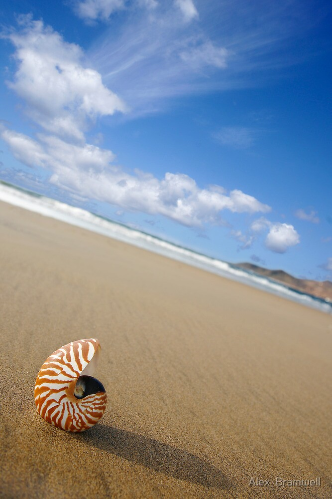 Beached Nautilus by Alex  Bramwell
