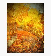 The Autumn Curve Photographic Print