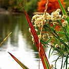 Autumn Days by the pond. by Cricket Jones