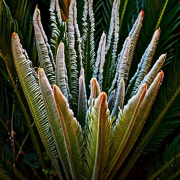 Emerging Palm Fronds by lenzart
